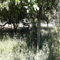 Vendo 3 terrenos en Troncal del Norte cerca de Aguilares