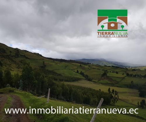 VENTA 7 HECTAREAS DE BOSQUE EN PESILLO – CAYAMBE