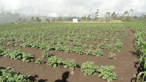 Vendo propiedad de 7 hectáreas en Otavalo
